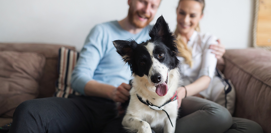 Pet Care Support Programs